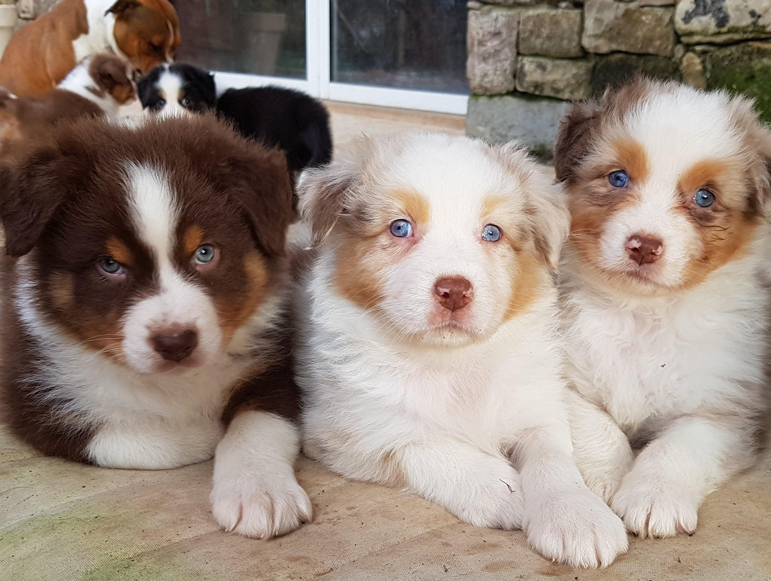 Les tresors d'esay blue contact bebe