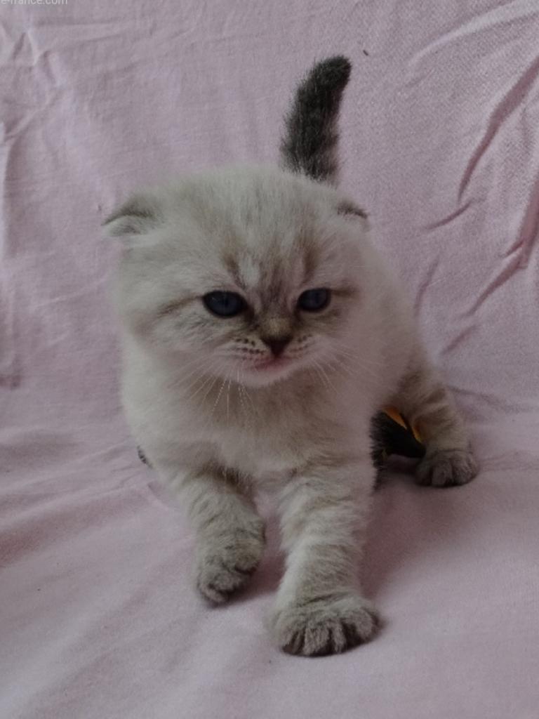 Molly cat's craddle des tresors d easy blue bebe